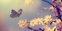 My Spiritual Butterfly
